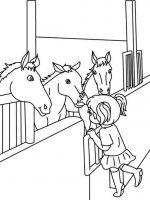 Pferde 3