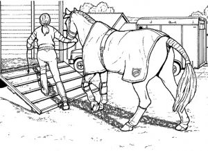 Pferde zum ausmalen 12
