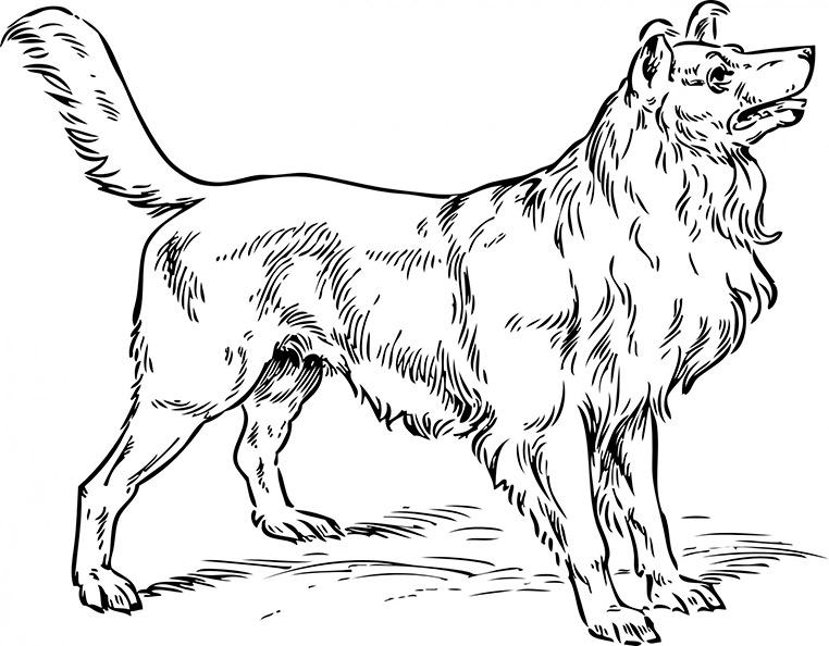 Ausmalbild Hund 1