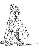 Hund 6